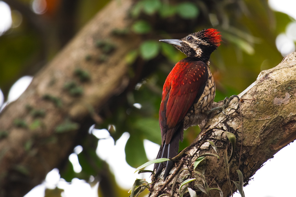 Sri Lankan Wildlife: a paradise for bird watchers